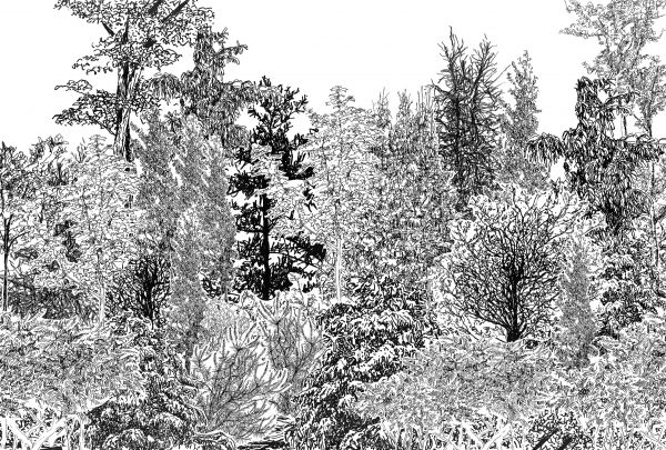 Artificial Forest, Collage of photocopies of original drawings, 27 x 40 inches, framed